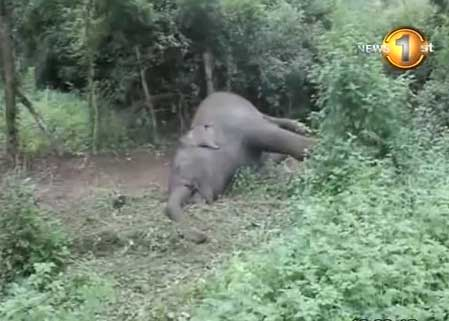 Another elephant electrocuted in Mattala
