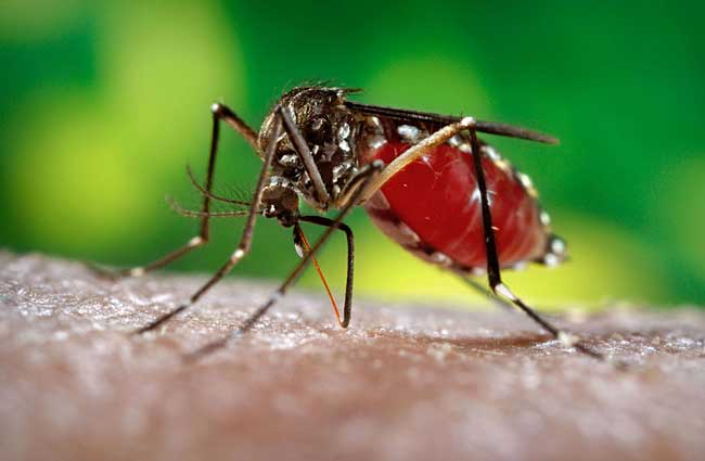 Health Ministry observes increase in number of Dengue cases