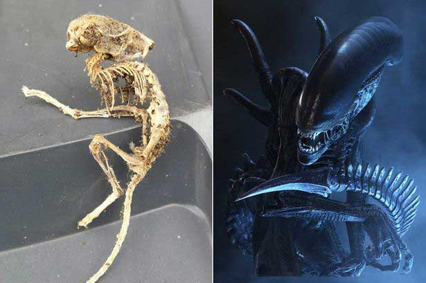 'Alien skeleton' unearthed by record label director is dead ringer for Ridley Scott film beast