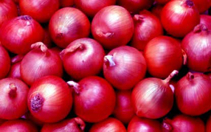 Big onion farmers climb roofs in Dambulla – revised price to come into effect