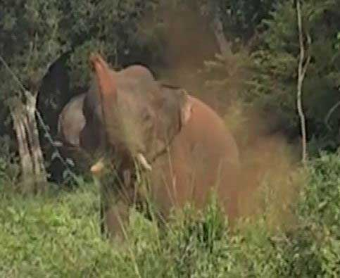 Experts speak out as threats from wild elephants loom large; focus on Ududumbara, Dambagahapitiya