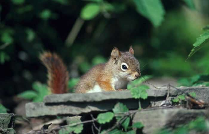 Squirrel knocks out power to thousands in San Francisco