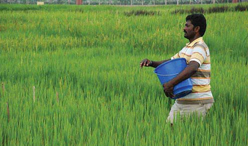 Agrarian Services Dept to replace farmers' subsidy with funds