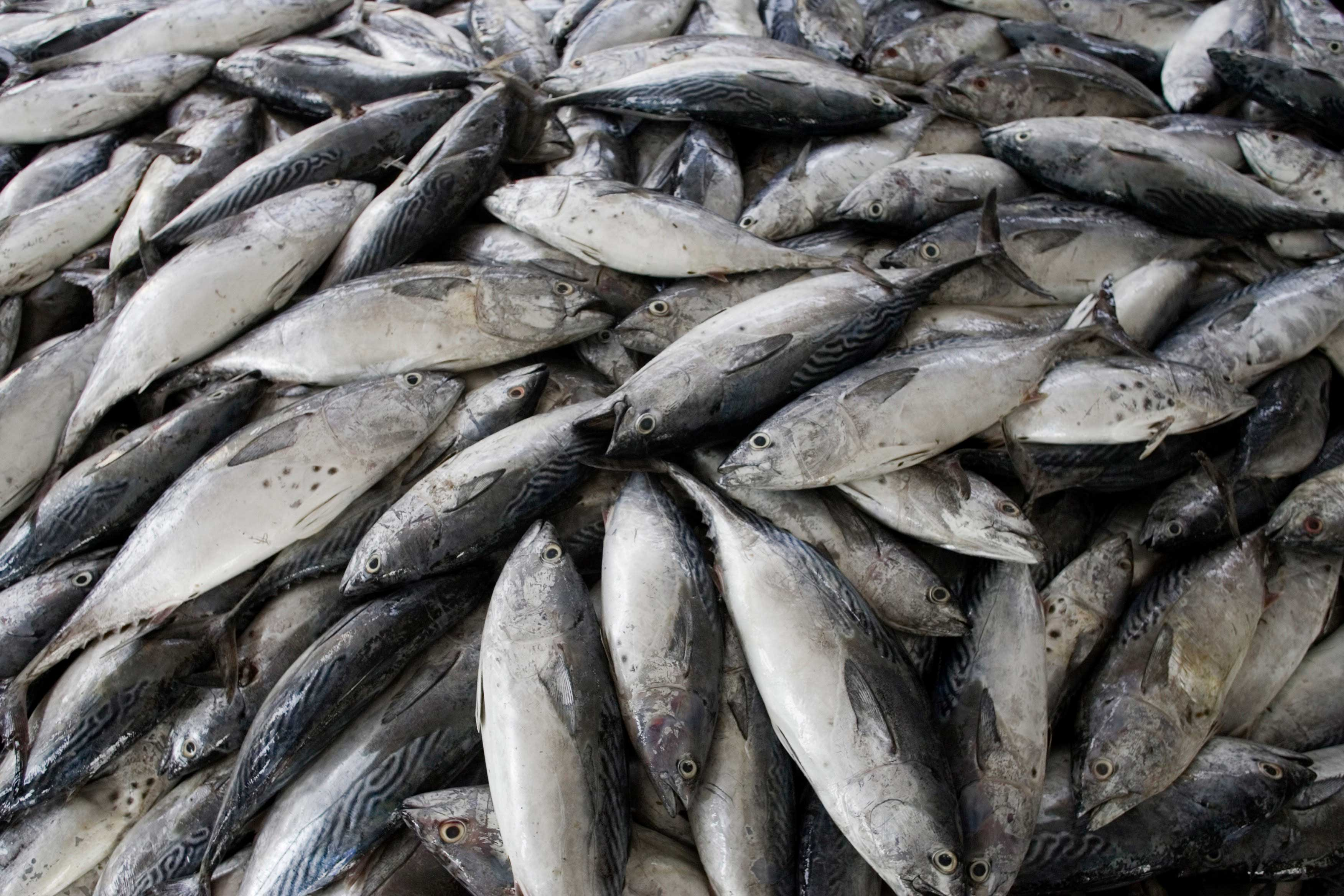 Rains and winds deal harsh blow to local fish prices