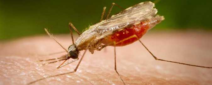 "SL applies to WHO for certification on country's ""malaria status"""