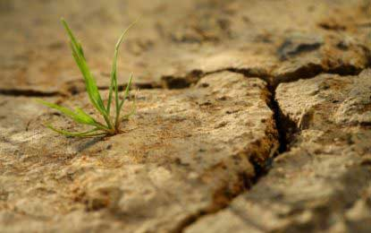 Prevailing drought conditions – Jaffna district worst-affected