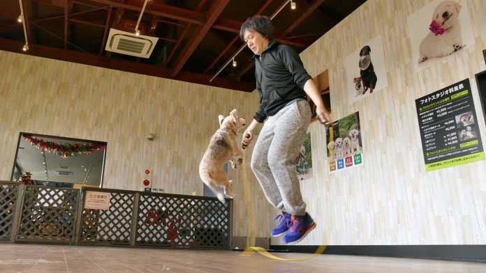 Watch : Most skips by a dog and person