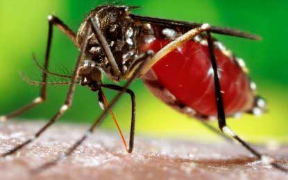 Dengue high-risk zones identified  in Colombo district