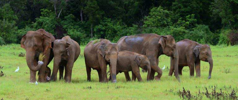 Wildlife Dept to research and probe elephant killings in the country
