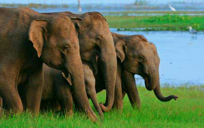Elephants for Katina pinkam festivals – Wild life authorities to comply with court orders