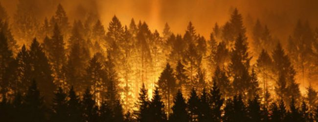 Fire at the Alogolla reserve in Badulla under control