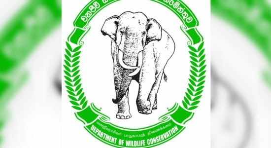 Signals to inform train drivers of wild elephants