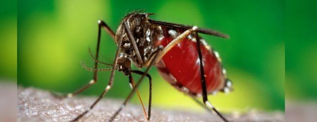 70% drop in Dengue cases
