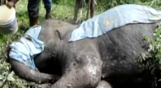 Elephant which collided onto a train succumbs to injuries