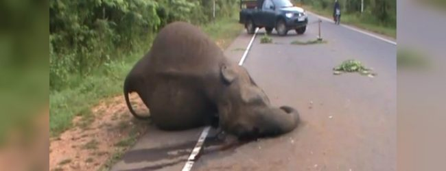 Elephant dies in motor accident