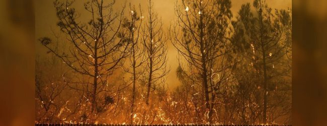 Dried shrubs and wind fuel deadliest wildfire in California