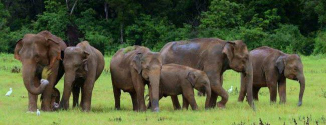 Two children, 9 & 11, killed in elephant attack in Mahiyanganaya last night