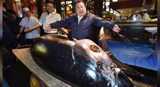 Japan sushi tycoon pays record tuna price