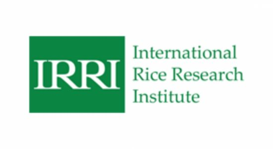 Sri Lanka signs 5 year agreement with IRRI