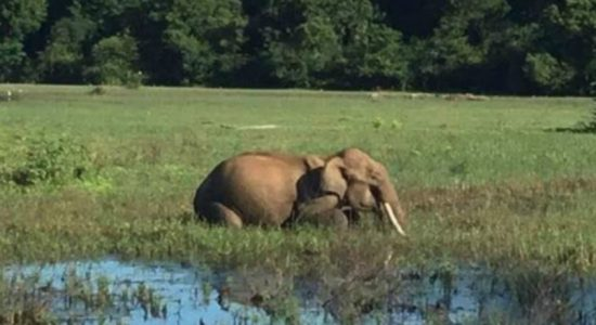58 year old victim of an elephant attack