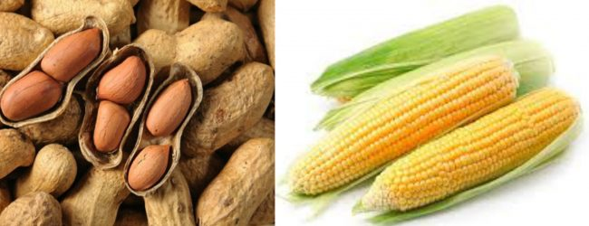 Import permit for peanuts and corn to be cancelled