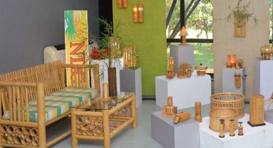 Bamboo Can Strengthen and Diversify the Incomes of Smallholder Farmers