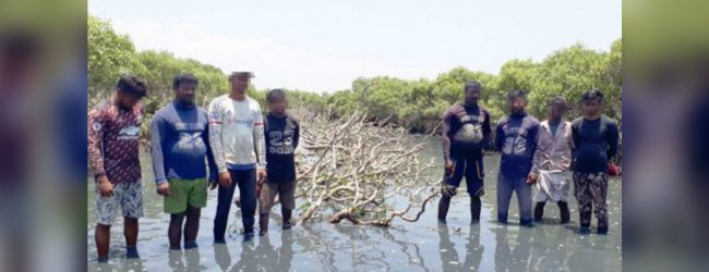 Eight arrested for cutting mangrove shrubs