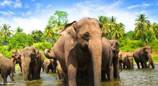 Wild elephants takeover central hill water source: People consume contaminated water